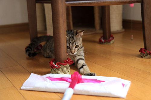 モップと闘う猫_d0355333_19072200.jpg