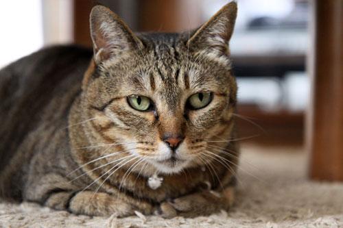 モップと闘う猫_d0355333_19072234.jpg
