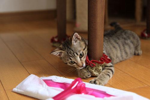 モップと闘う猫_d0355333_19072245.jpg