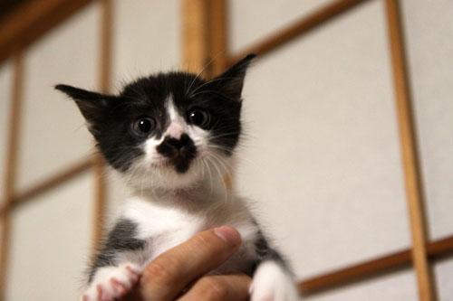 モップと闘う猫_d0355333_19072259.jpg