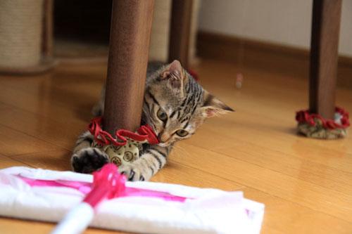 モップと闘う猫_d0355333_19072293.jpg