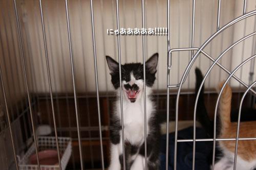 動画★おこめちゃんの朝ご飯_d0355333_19083322.jpg