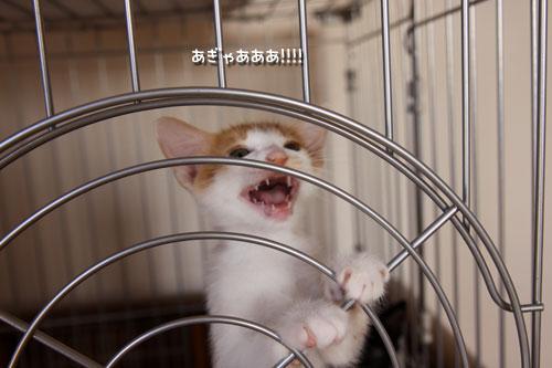 動画★おこめちゃんの朝ご飯_d0355333_19083358.jpg