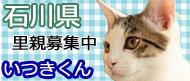 毛色考・黒猫の場合_d0355333_19092803.jpg