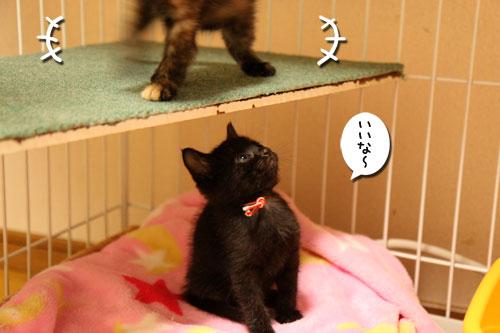 毛色考・さび猫の場合_d0355333_19093738.jpg