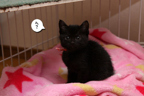 毛色考・さび猫の場合_d0355333_19093778.jpg
