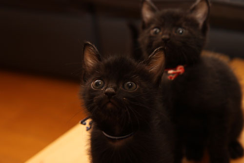 毛色考・黒猫の場合_d0355333_19093822.jpg