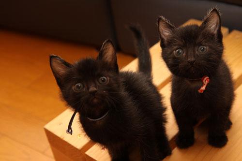 毛色考・黒猫の場合_d0355333_19093840.jpg