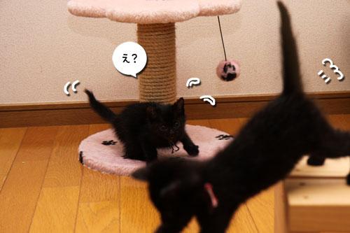 毛色考・黒猫の場合_d0355333_19093927.jpg