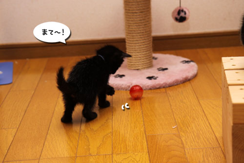 毛色考・黒猫の場合_d0355333_19093951.jpg