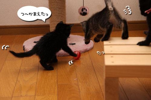 毛色考・黒猫の場合_d0355333_19093970.jpg