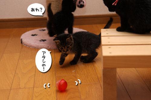 毛色考・黒猫の場合_d0355333_19093993.jpg