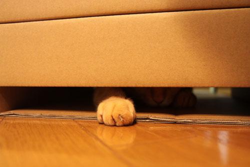毛色考・黒猫の場合_d0355333_19094052.jpg
