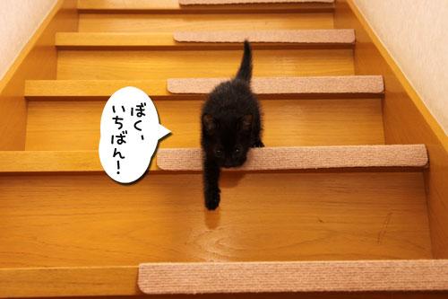 階段上手は誰?_d0355333_19100084.jpg