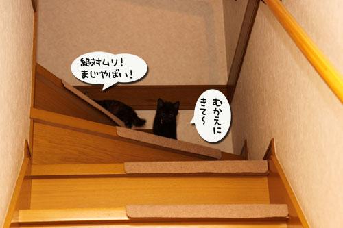 階段上手は誰?_d0355333_19100139.jpg