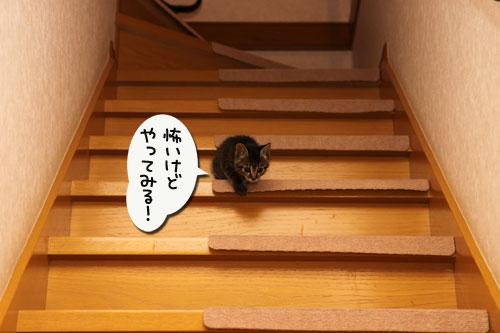 階段上手は誰?_d0355333_19100160.jpg