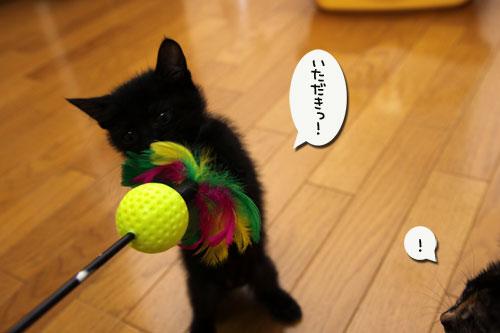 おもちゃにドキドキ_d0355333_19100618.jpg