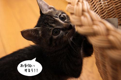 お洗濯応援隊結成!_d0355333_19103593.jpg