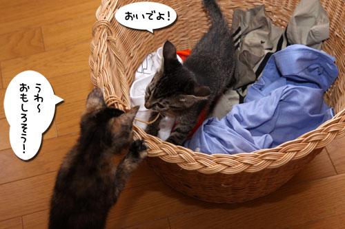 お洗濯応援隊結成!_d0355333_19103664.jpg