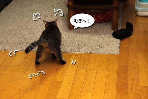 猫ソファをめぐるアホなあらそい_d0355333_19103912.jpg