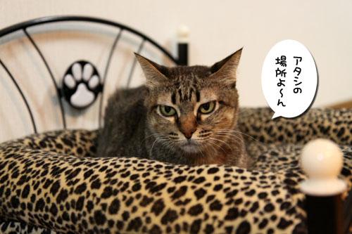 猫ソファをめぐるアホなあらそい_d0355333_19103939.jpg