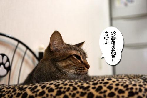 猫ソファをめぐるアホなあらそい_d0355333_19103987.jpg