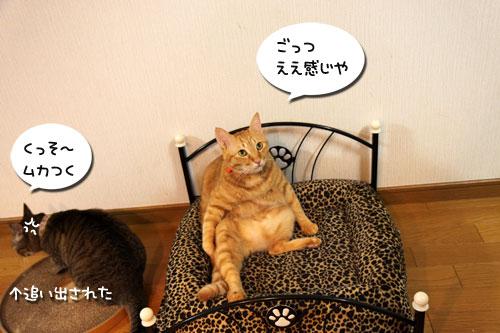 猫ソファをめぐるアホなあらそい_d0355333_19104004.jpg