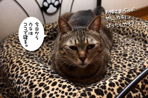 猫ソファをめぐるアホなあらそい_d0355333_19104057.jpg