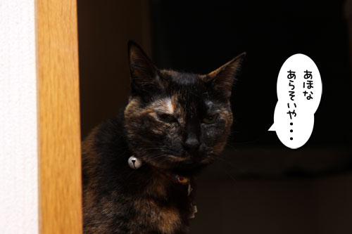 猫ソファをめぐるアホなあらそい_d0355333_19104074.jpg