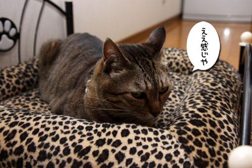 猫ソファをめぐるアホなあらそい_d0355333_19104085.jpg