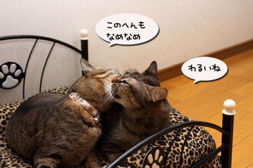 猫ソファでの出来事。_d0355333_19105306.jpg