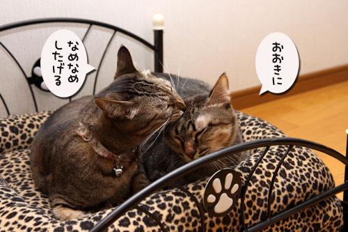 猫ソファでの出来事。_d0355333_19105384.jpg
