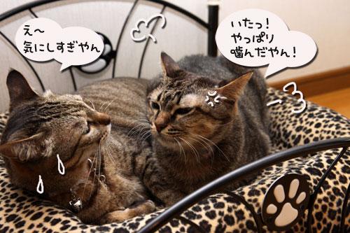 猫ソファでの出来事。_d0355333_19105411.jpg