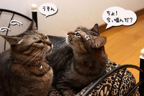 猫ソファでの出来事。_d0355333_19105424.jpg