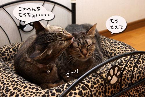 猫ソファでの出来事。_d0355333_19105434.jpg