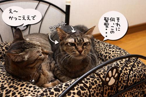 猫ソファでの出来事。_d0355333_19105467.jpg