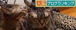 猫ソファでの出来事。_d0355333_19105503.jpg