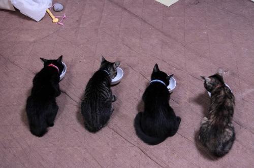 猫ソファでの出来事。_d0355333_19105555.jpg