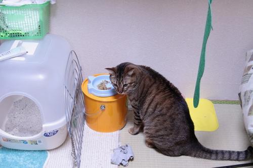 猫ソファでの出来事。_d0355333_19105680.jpg