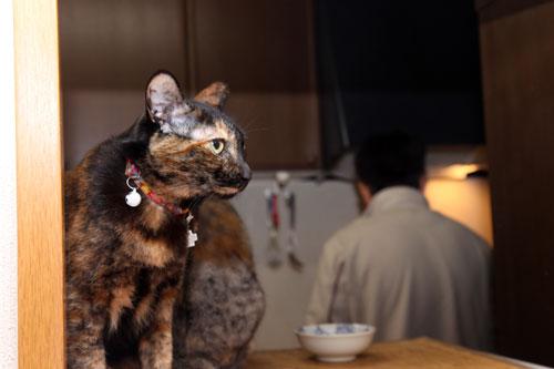 12日の夜と「犬と猫と人間と」レビュー_d0355333_19115303.jpg