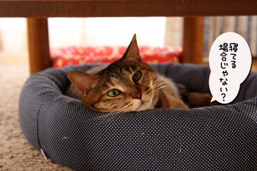 12日の夜と「犬と猫と人間と」レビュー_d0355333_19115371.jpg
