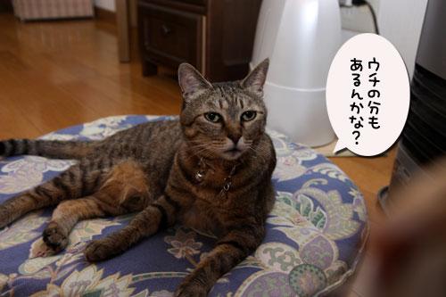 12日の夜と「犬と猫と人間と」レビュー_d0355333_19115426.jpg