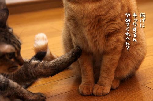 12日の夜と「犬と猫と人間と」レビュー_d0355333_19115450.jpg
