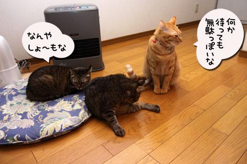 12日の夜と「犬と猫と人間と」レビュー_d0355333_19115455.jpg