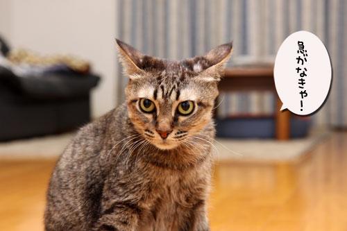 12日の夜と「犬と猫と人間と」レビュー_d0355333_19115465.jpg