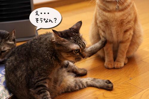 12日の夜と「犬と猫と人間と」レビュー_d0355333_19115493.jpg
