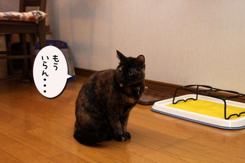 猫草、みんなの反応は_d0355333_19120607.jpg