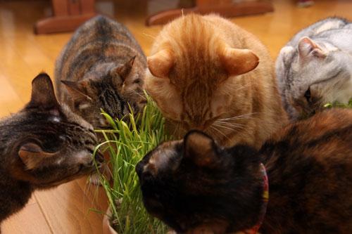 猫草、みんなの反応は_d0355333_19120638.jpg