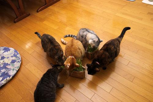 猫草、みんなの反応は_d0355333_19120640.jpg