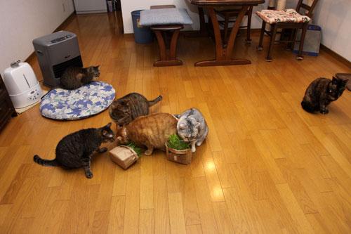 猫草、みんなの反応は_d0355333_19120647.jpg